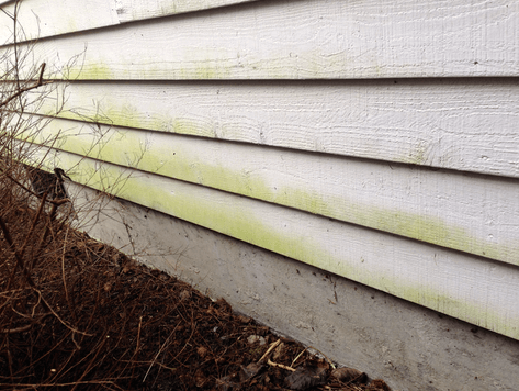 cleaning free off siding