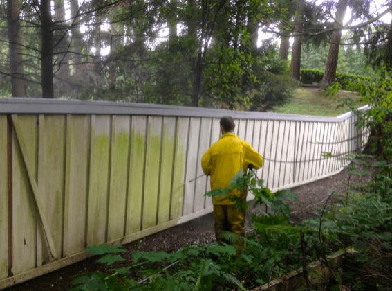 Pianting contractors sammamish WA